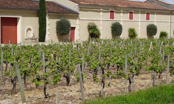 Château Beau Site <br/>Haut-Vignoble <br/>AOC Saint-Estephe