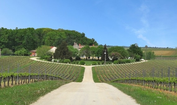Château <br/>Corbin <br/>AOP Saint-Emilion