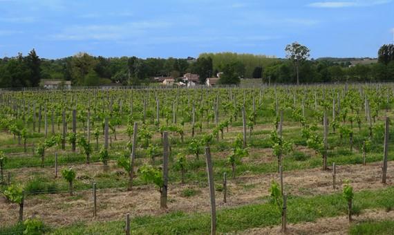 Château Relais <br/>de la Poste <br/> AOP Côtes de Bourg