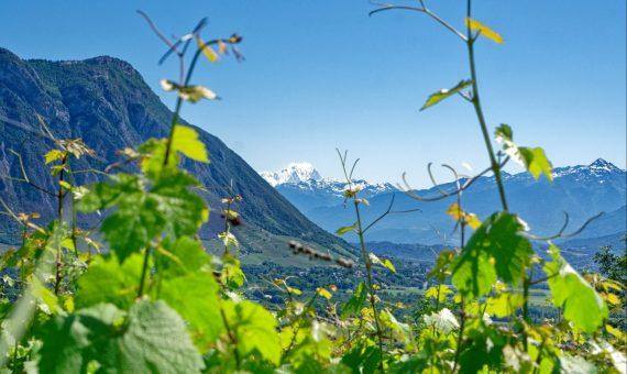 Pinot Noir <br/>Chais du Lavieu <br/>AOC Vin de Savoie