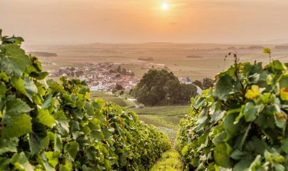 Brut Rosé 1er Cru<br/> Domaine Lacourte-Godbillon Godbillon<br/> AOC Champagne