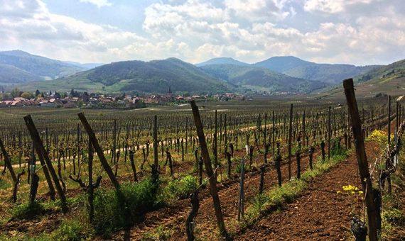Kaefferkopf <br/>Grand Cru <br/>Alsace