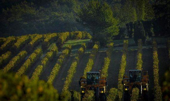 Domaine des <br/>Carteresses<br/>AOP <br/>Côtes du Rhône