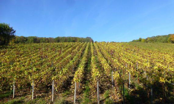 Chaillots Hautes Vignes<br/>Domaine Lacourte Godbillon<br/>AOP Champagne
