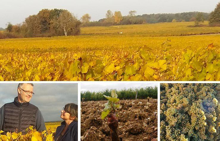 Domaine Boutet Saulnier<br/>Vouvray Brut <br/> Dry