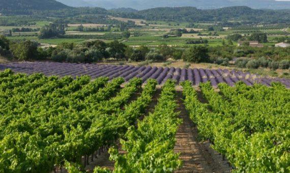 Domaine Marrenon<br/>Roséfine<br/>AOP Provence