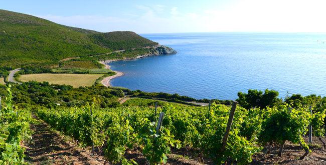 Terra Corsia <br/> Corse
