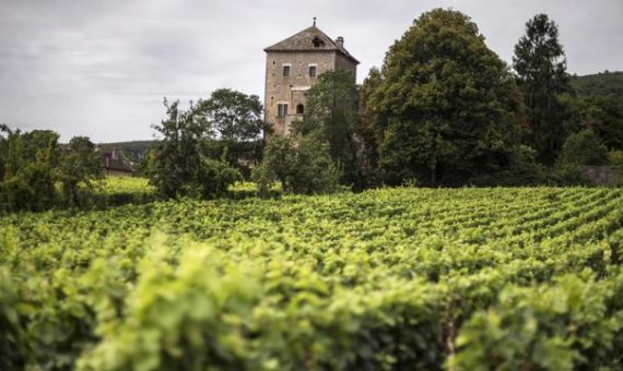 Gevrey Chambertin <br/> Vieilles Vignes <br/> Alain Corcia