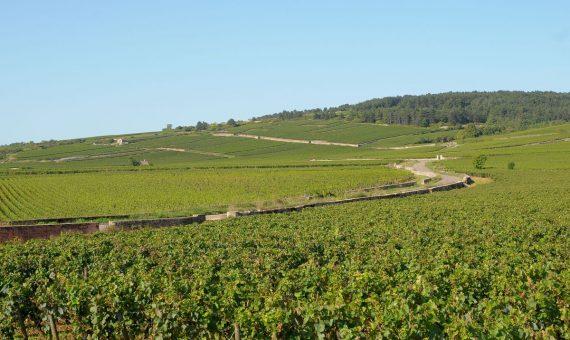 Pommard Les Vignots <br/> Alain Corcia