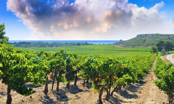 Métairie<br/>Pinot Noir<br/>IGP Pays d'Oc