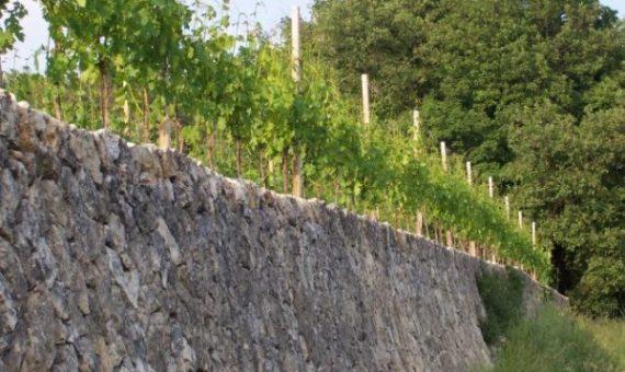Antolini Wines