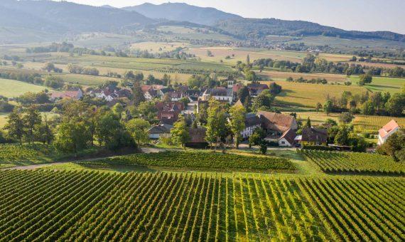 Zähringer – Grauburgunder Vierlig